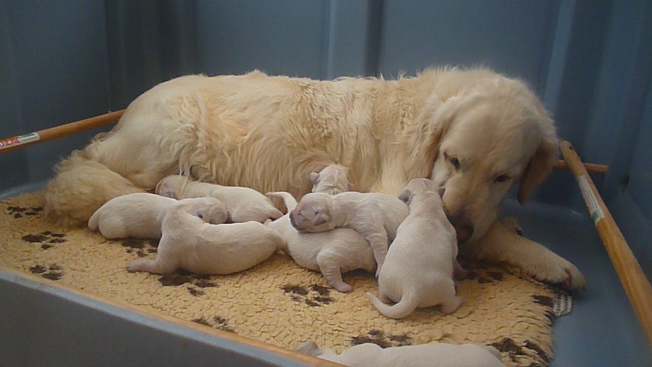 Bébés 3 jours