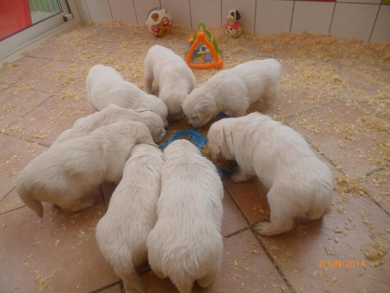 Bébés d'Edith 4 semaines