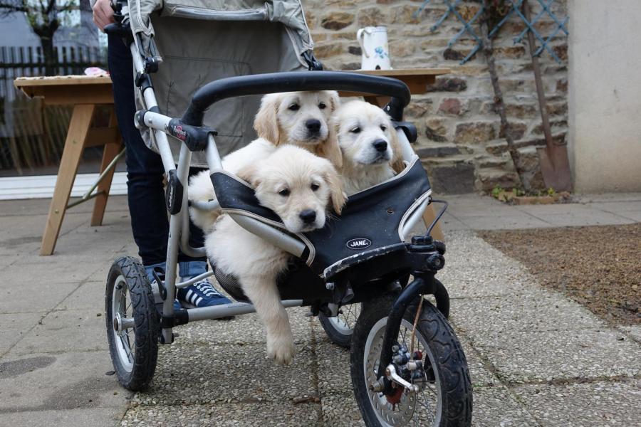 Les bébés de Jupette vont au marché.